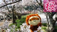 桜情報バナー